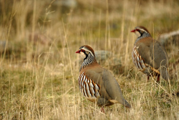Fotolia 28516936 M 352x236 Photos de chasse